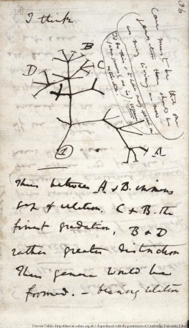 A page from Darwin's tranmutation Notebook B